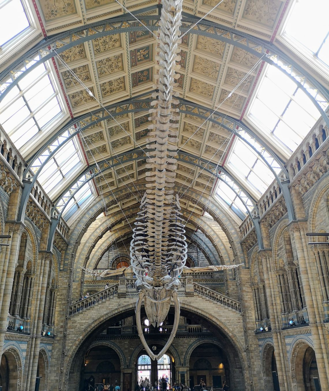 musee histoire naturelle londres